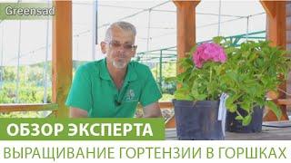 видео Как садить огурцы на рассаду на балконе: выбор места и емкости, подготовка грунта, когда сажать и как ухаживать