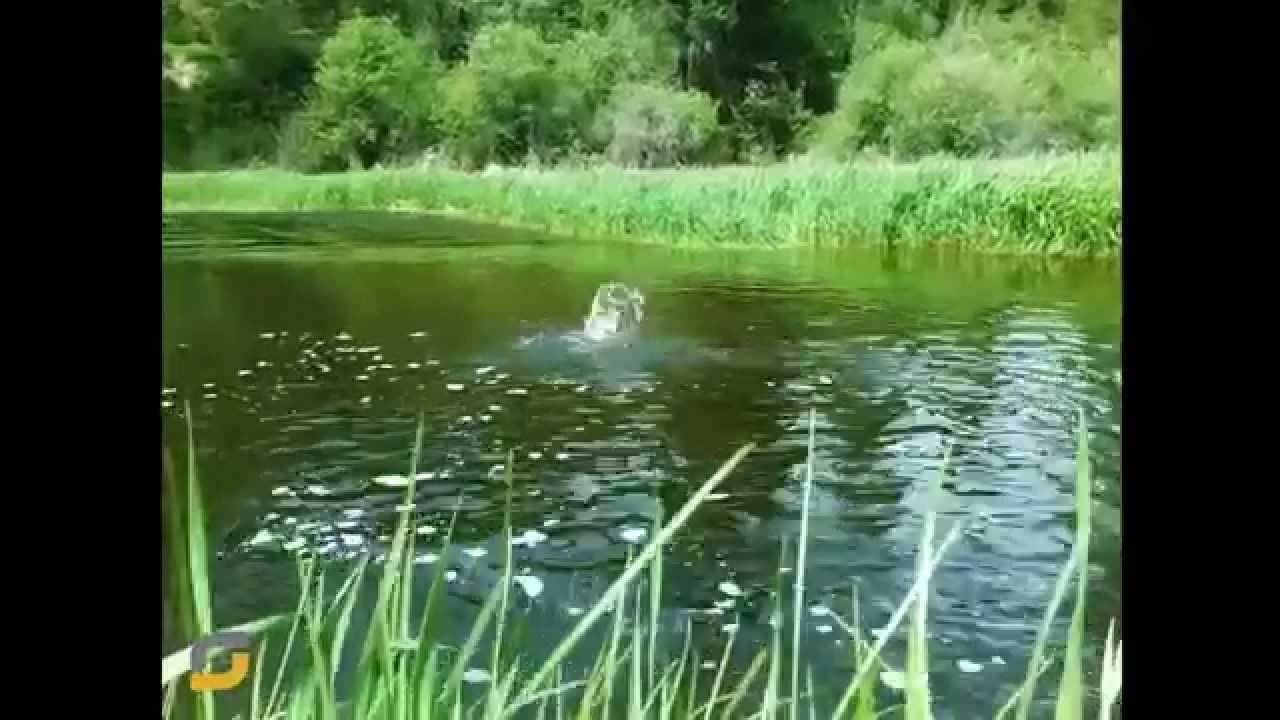 Fly Fishing Thompson River Mt Youtube