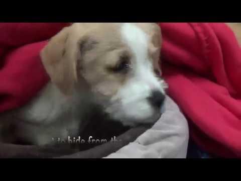 Please Help Save Puppy Boy! 3 months!