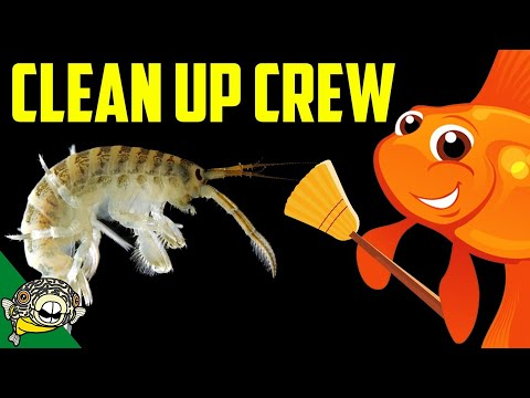 Freshwater Clean up Crew - I smuggled it back from California. Live Stream.