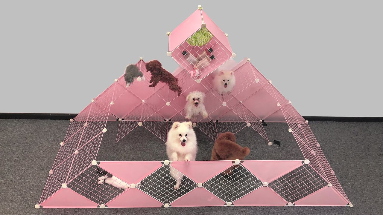 DIY Dog House Pyramid For Pomeranian Puppies & Kitten At Home Ideas | MR PET