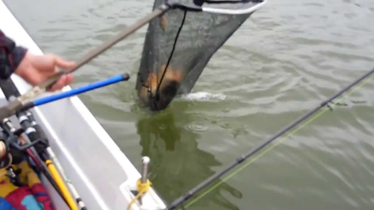 Pescuit la crap, in Delta Dunarii , momeala: la rama si mamaliga, aprilie 2013