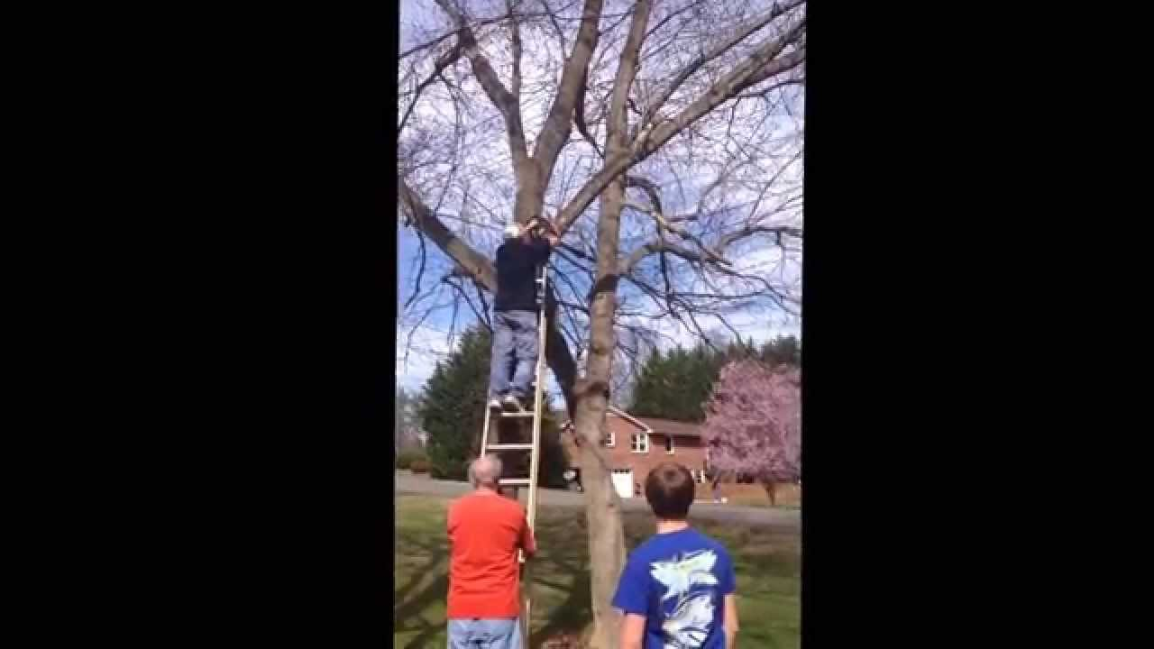 Guy Gets Hit By Tree Limb And Falls Off Ladder Youtube