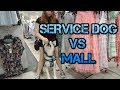 SERVICE DOG MALL TRAINING (BEFORE THE MISTAKE)