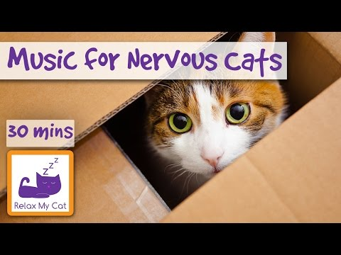 Music for Nervous Cats! Relax your Nervous or Stressed Cat with Soothing Music