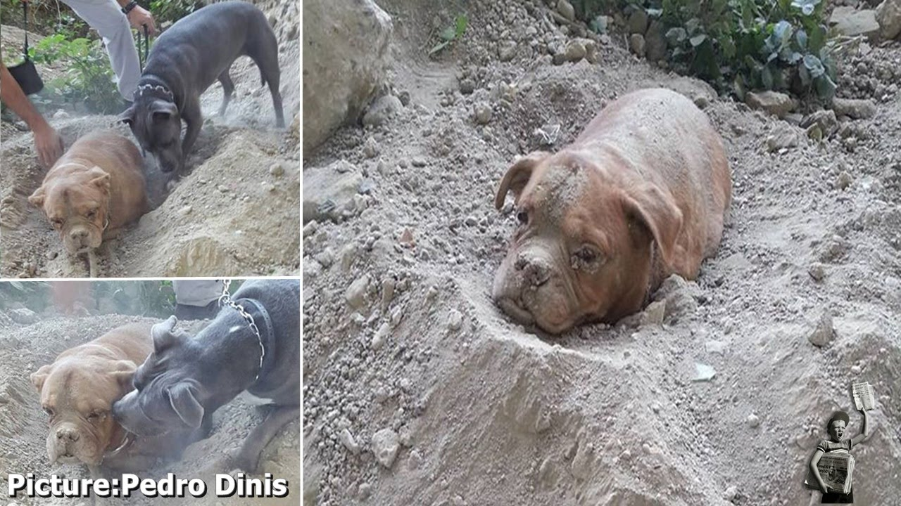 Dog Buried Alive Rescued