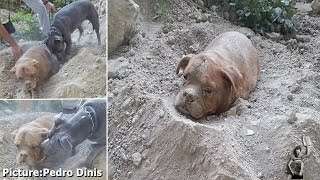 Dog Found Buried Alive With Collar Tied To Sack