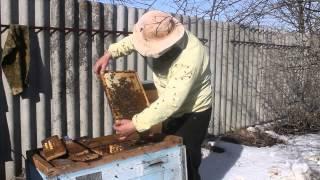 Ускоренное весеннее развитие пчёл Часть 1