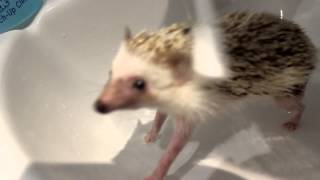 One of Miss Yammy's most viewed videos: Sonic the Hedgehog's first Bath