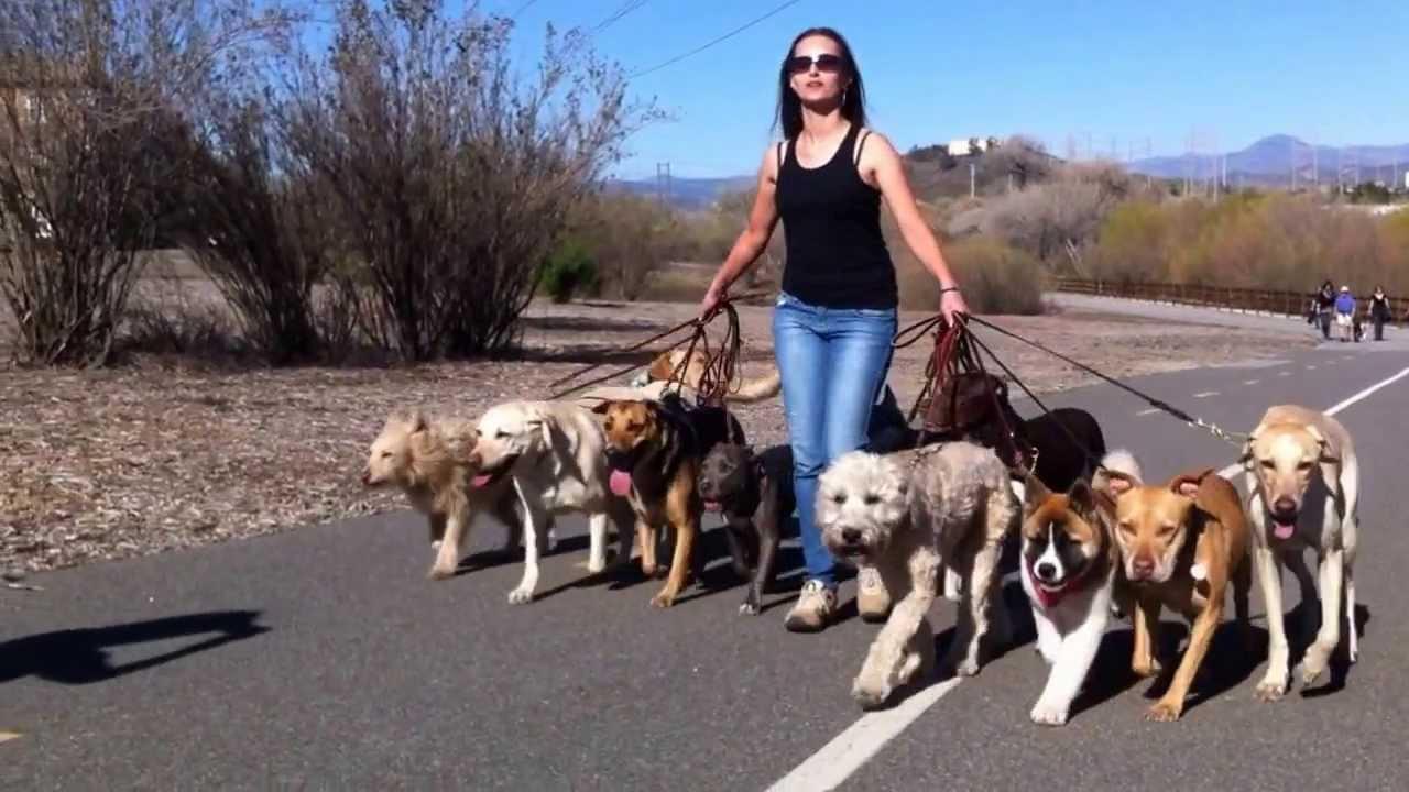Brian Agnew Dog Trainer