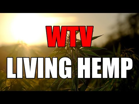 What You Need To Know About LIVING HEMP