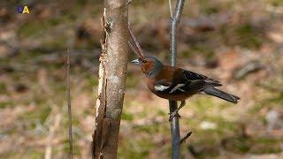 Миграция птиц | Неизведанная Украина