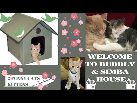 welcome to kittens house