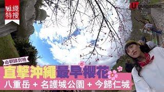 【#短綫特搜】去沖繩睇全日第一早櫻 必 check八重岳+今歸仁城+名護城公園