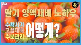 [딸기] 양액재배(1편) / 딸기하우스 수분관리 습도관…