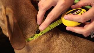 How to Measure Your Dog for a Perfect Fit : Dog & Pet Care