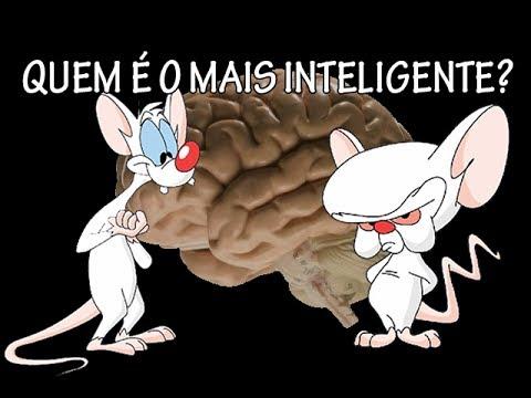 O Pinky E O Cérebro Quem é Mais Inteligente Youtube