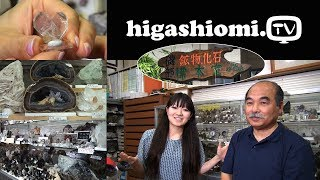 higashiomi.TV #17☆「磯部 鉱物,化石 標本室」をリポート
