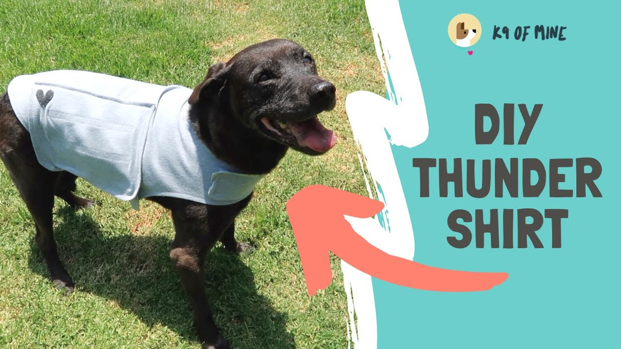 Diy Thundershirt How To Make Your Own Canine Anxiety Wrap K9 Of Mine