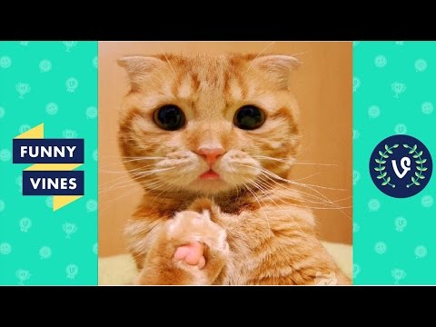 Cute cats Compilation 2016 - Best Cutest Cat Videos ever