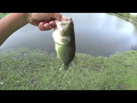 How To Fish A Senko/Yum Dinger/ Worm