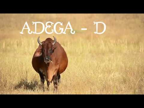 Resultado de imagem para Vaca Sindi Adega D