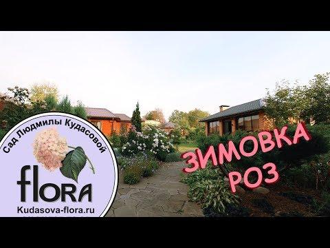 видео: Зимовка Роз - Сад Людмилы Кудасовой