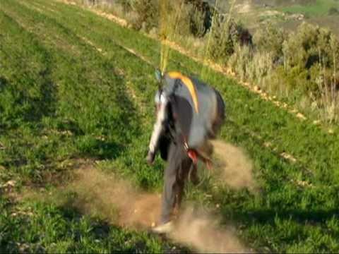 paragliding videos