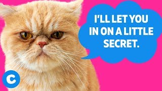 10 Things Your Cat Doesn't Want You to Know