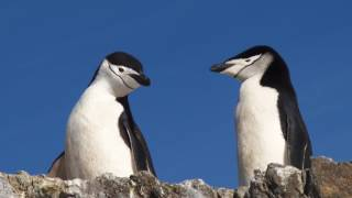 The Humorous Habits of Penguins