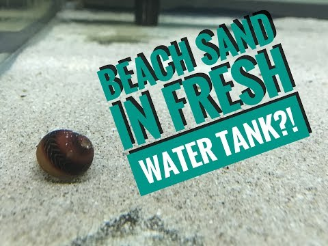 Saltwater/Beach Sand For Fresh Water Tank