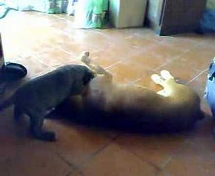 Ettore don vito for Gatto che starnutisce
