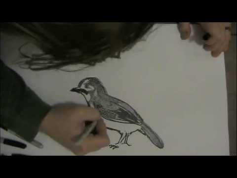 ASMR Drawing: Bird - Whisper Chat
