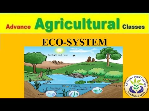 ECOSYSTEM  Ecology - part - 1 (Hindi/English) Agricultural Field Officer IBPS