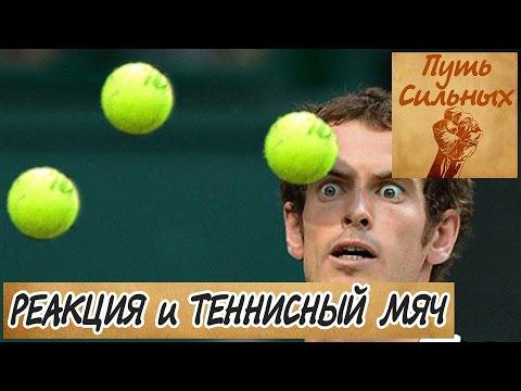 Упражнения с теннисным мячом для реакции и внимания в единоборствах