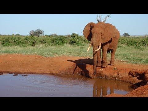 Kenya 2017-18 - Safari Tsavo East