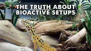 All About Bioactive Reptile Tanks - Lighting, Clean Up Crew & More!