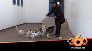 Le360.ma •خديجة مربية قطط كرست حياتها لتربية الحيوانات المتشردة