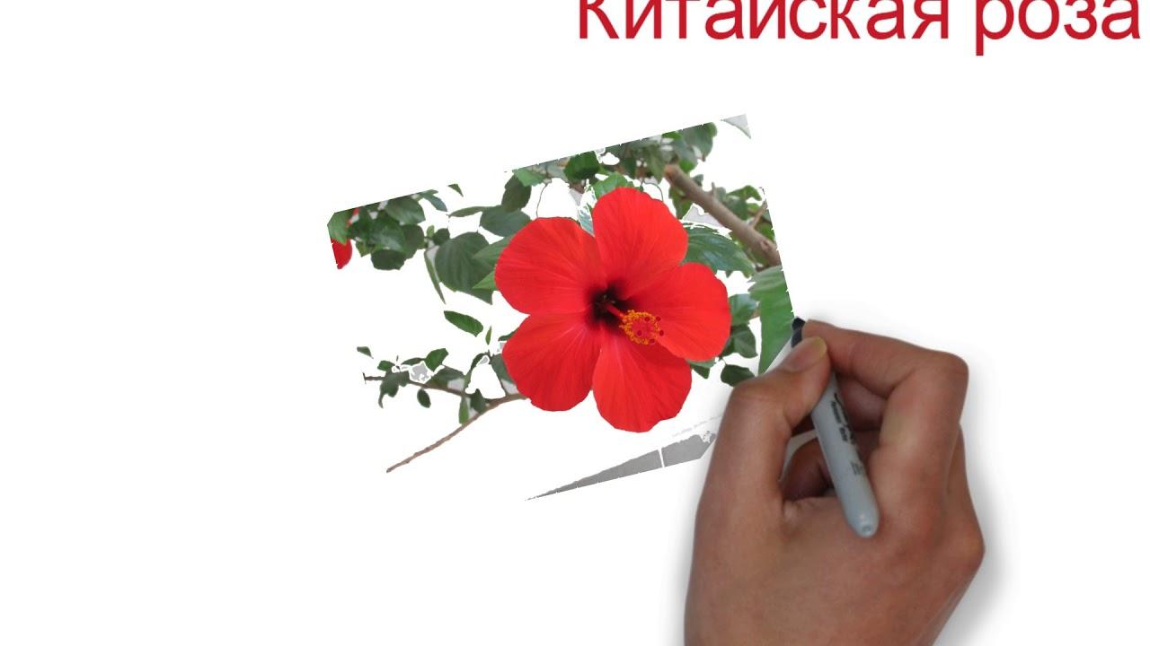 Питомник декоративных растений ева предлагает широкий ассортимент деревьев и саженцев с доставкой по киеву и области. Приобрести товар можно в садовом центре или магазине. Заходите!