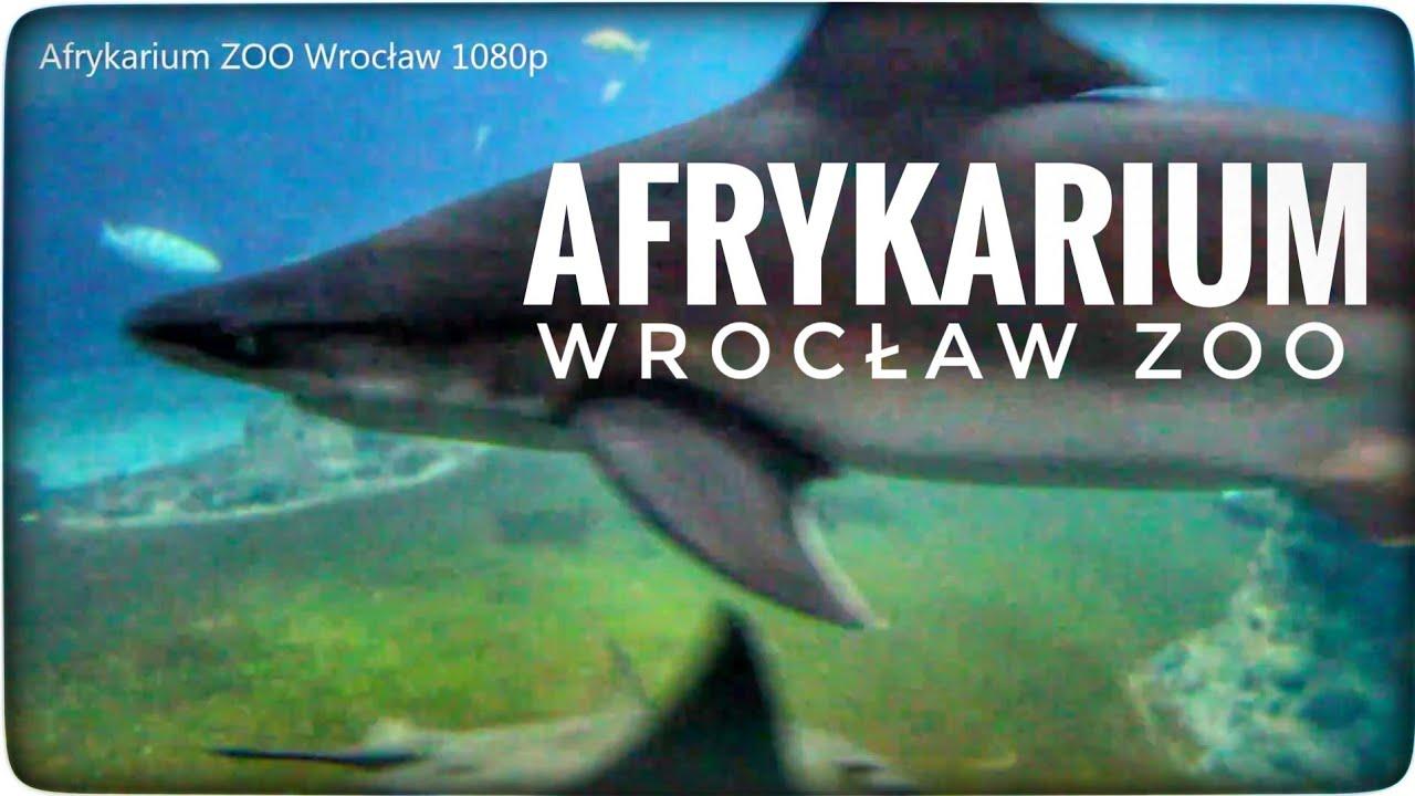 Afrykarium Oceanarium ZOO Wrocław – Byłeś/aś?