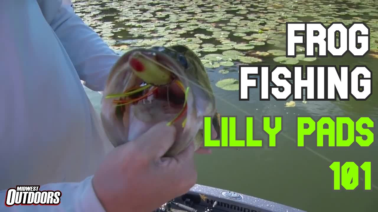 Download Frog Fishing Lilly Pads 101