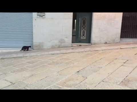 Más ratas por Ourense, esta vez en As Burgas
