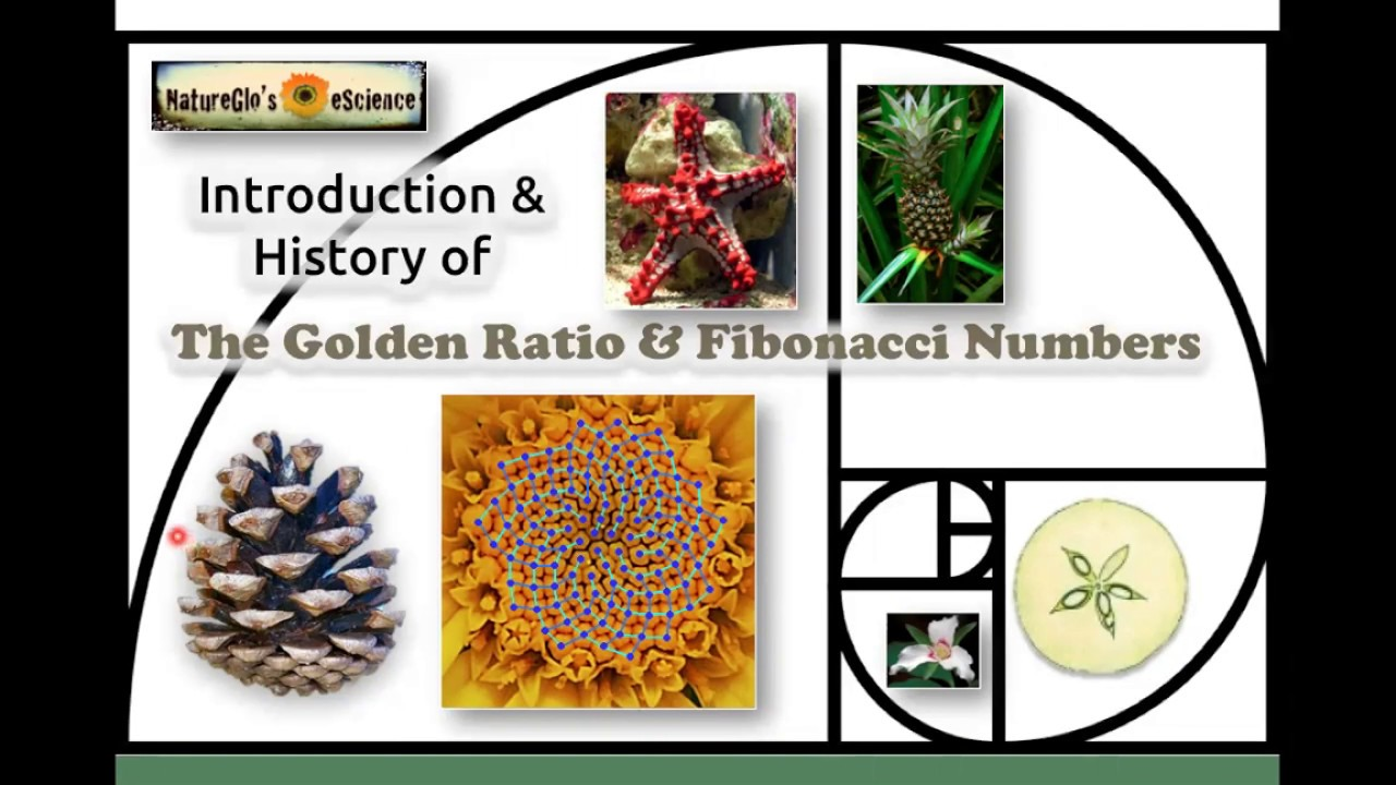 A Mathematical History of the Golden Number (eBook)