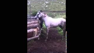 Дикий конь