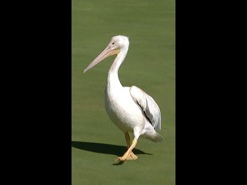 Pelican: The final boss 😎