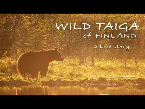WILD TAIGA of FINLAND   a love story by Morten Hilmer