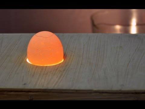 Оценка качества яиц перед закладкой в инкубатор. Лаборатория птицеводства УрГАУ