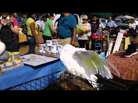 My Beautiful Cockatoos Pinky & Paco @ the Englishtown Flea Market in the Summer of 2013