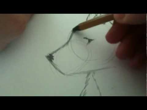 Рисуем волка(простой)