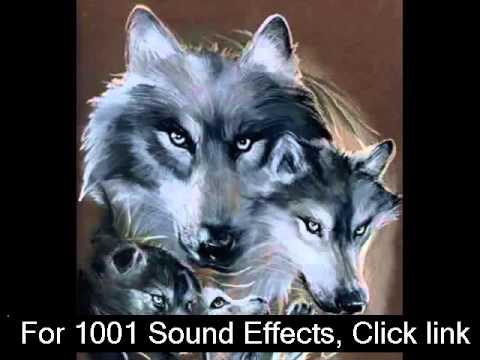 Watch Wolf Howl Sound Effect  Wolf Sound Effects